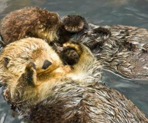 holding hands, love, and otter image