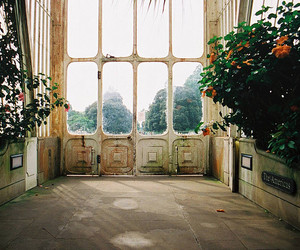 greenhouse, vintage, and flowers image