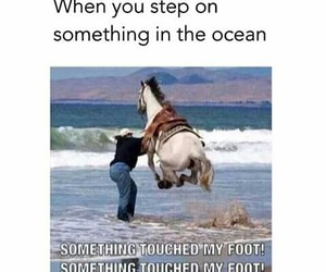 funny, ocean, and horse image