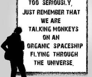 fun, monkeys, and quote image