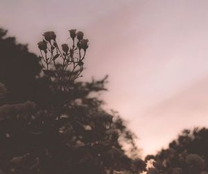 flowers, muted color, and muted colors image