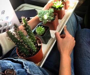 plants and tumblr image