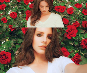 lana del rey, rose, and Queen image