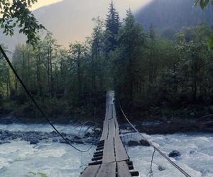 nature, bridge, and adventure image
