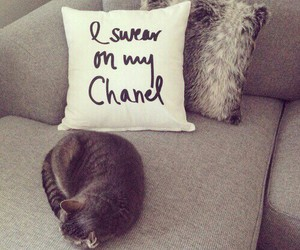 cat, chanel, and room image