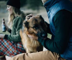dog, animal, and beer image
