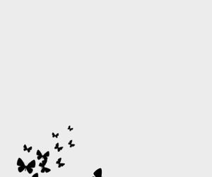 butterfly, خلفياتً, and background image