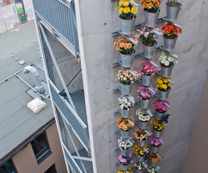 flowers and building image