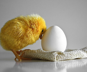 cute, Chick, and egg image