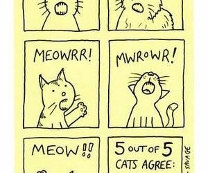 cats, fun, and hilarious image