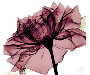 art, flower, and backgrounds image