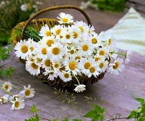 flowers, basket, and daisy image