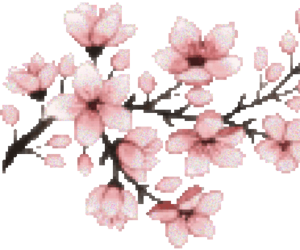 flowers, cherry blossoms, and floral image