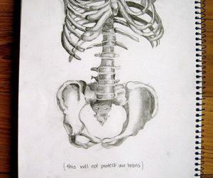 heart, drawing, and skeleton image