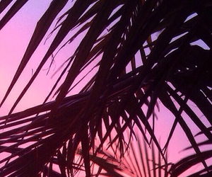 background, pink, and palm trees image