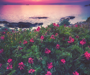 beautiful, flowers, and landscape image