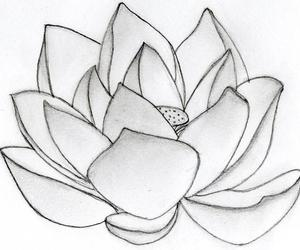 lotus flower bomb image