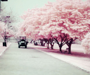pink and trees image