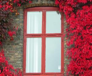 leaf, leaves, and window image