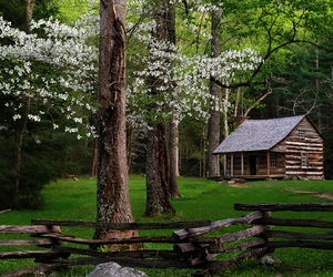 cabin, green, and wooden image