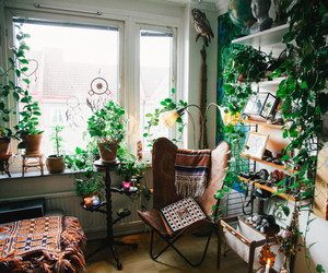 plants, room, and green image