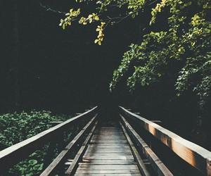 nature, trees, and bridge image