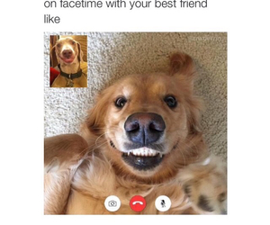 dog, funny, and facetime image