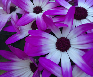 bloom, florals, and flowerpower image