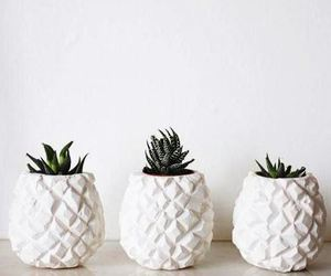 pineapple, plants, and white image