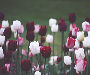 flowers, tulips, and feed image