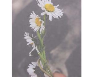 black, grunge, and flower image