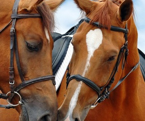 beautiful, equestrian, and horses image