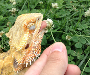 animal, flowers, and lizard image