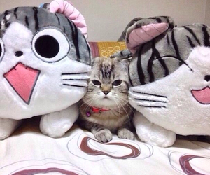 cat and kawaii image