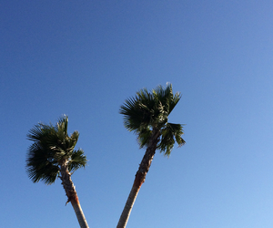 palm trees, sky, and blue image