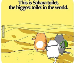 cat, funny, and Sahara image