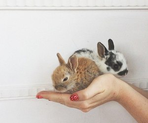 animal and rabbit image