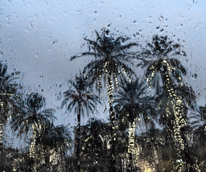 rain, palm trees, and palms image