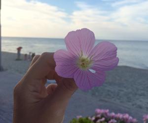 beach, beautiful, and body image