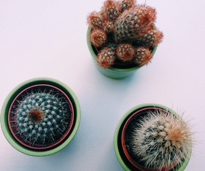 cactus, hipster, and vintage image