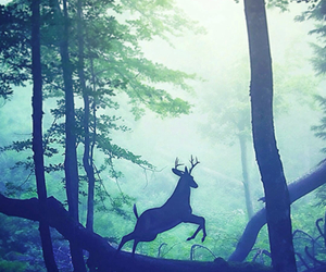 forest, deer, and nature image
