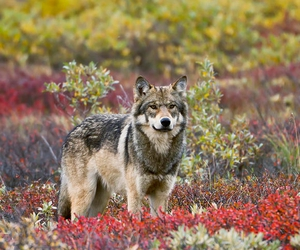flowers, wild, and wolf image