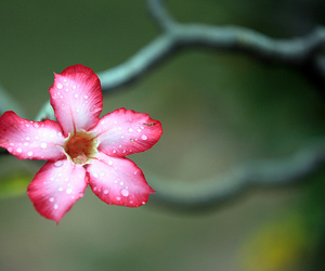 flower, nature, and photo image