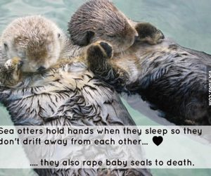 couple, sweet, and otter image