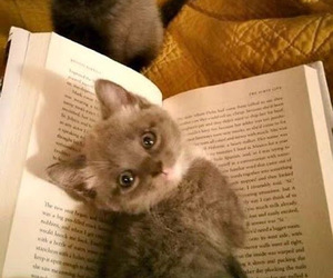 cat, cute, and book image