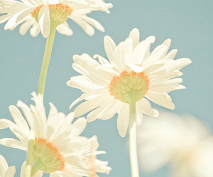 flowers, daisy, and blue image