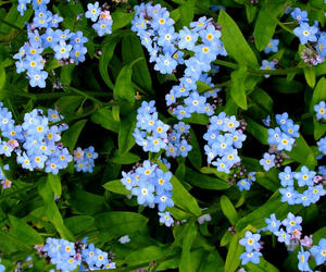 beautiful, blue, and flowers image