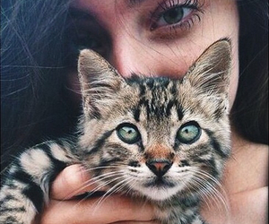 eyes, girl, and kitty image