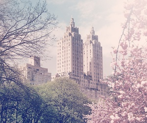 nature, flowers, and new york image