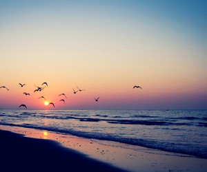 beach, bird, and sunset image